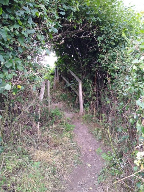 A footpath cleared of brambles